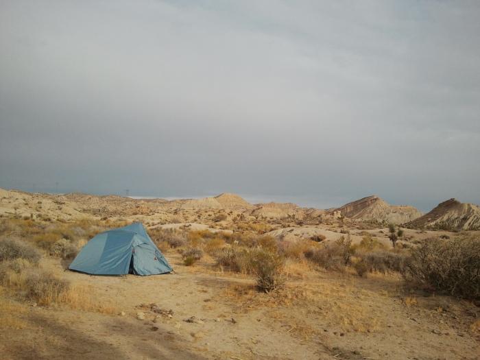 Coyote Landscape